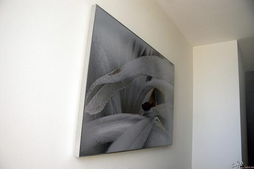 Untitled by Anastasiy Safari, Custom made silver frame, 2010